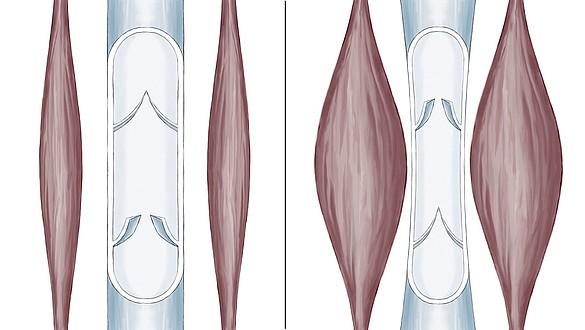 Bomba muscular de la pantorrilla