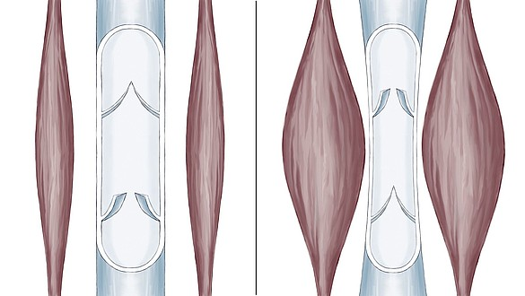 Bomba muscular de la pantorrilla - Bomba muscular de la pantorrilla